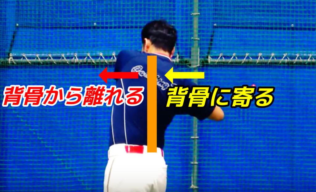 うまくできると、体重移動していくタイミングで左肩甲骨が背骨から離されていき、右肩甲骨は背骨に寄っていきます。